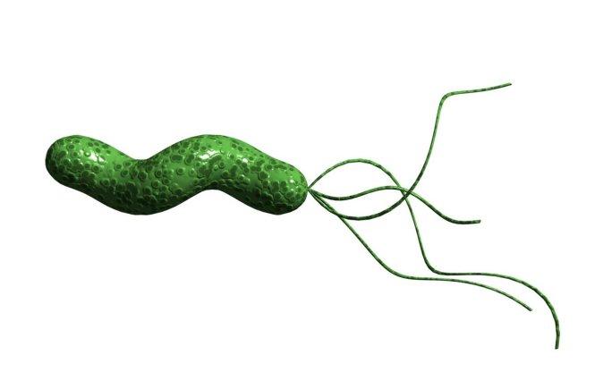 Nhiễm vi khuẩn H.pylori dễ bị đái tháo đường