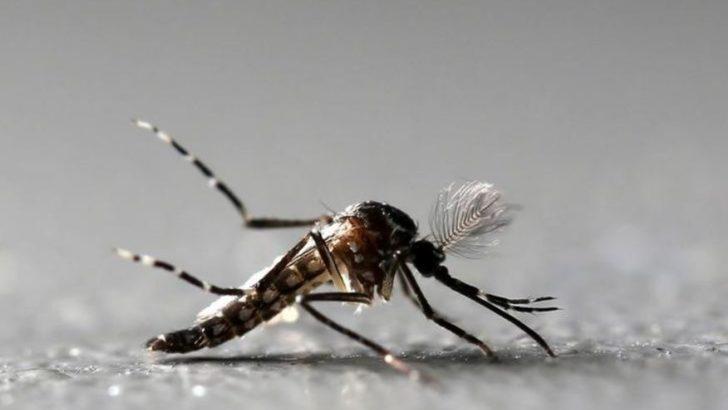 Anh: Nghiên cứu dùng virút Zika trị tế bào u não