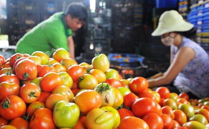 Cà chua – siêu thực phẩm phòng chống ung thư
