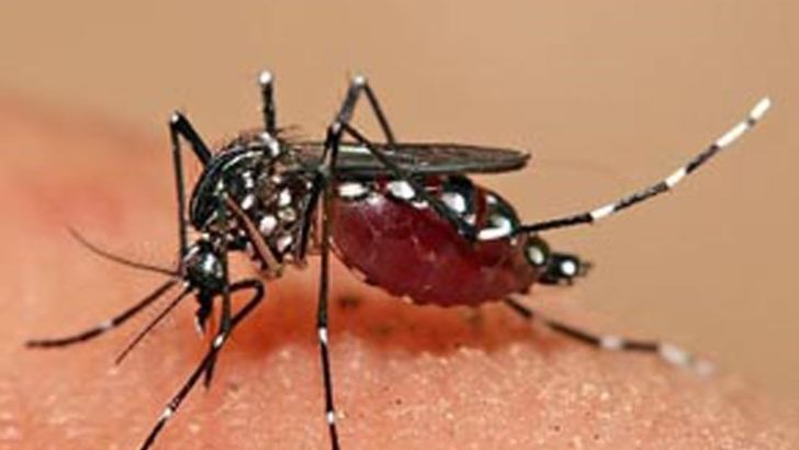 Số ca tử vong do sốt xuất huyết tăng 50%