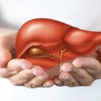 Bài thuốc kết hợp 3 thảo dược giải độc gan